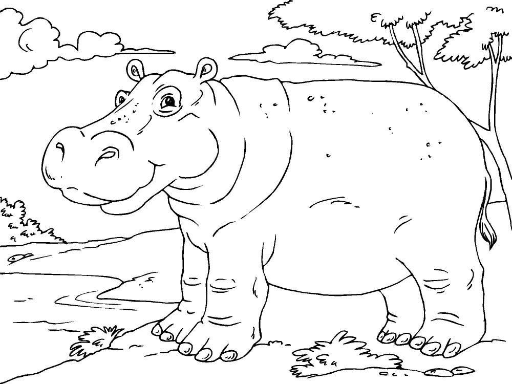 Galer a de im genes dibujos de hipop tamos para colorear for Dibujo de una piedra para colorear