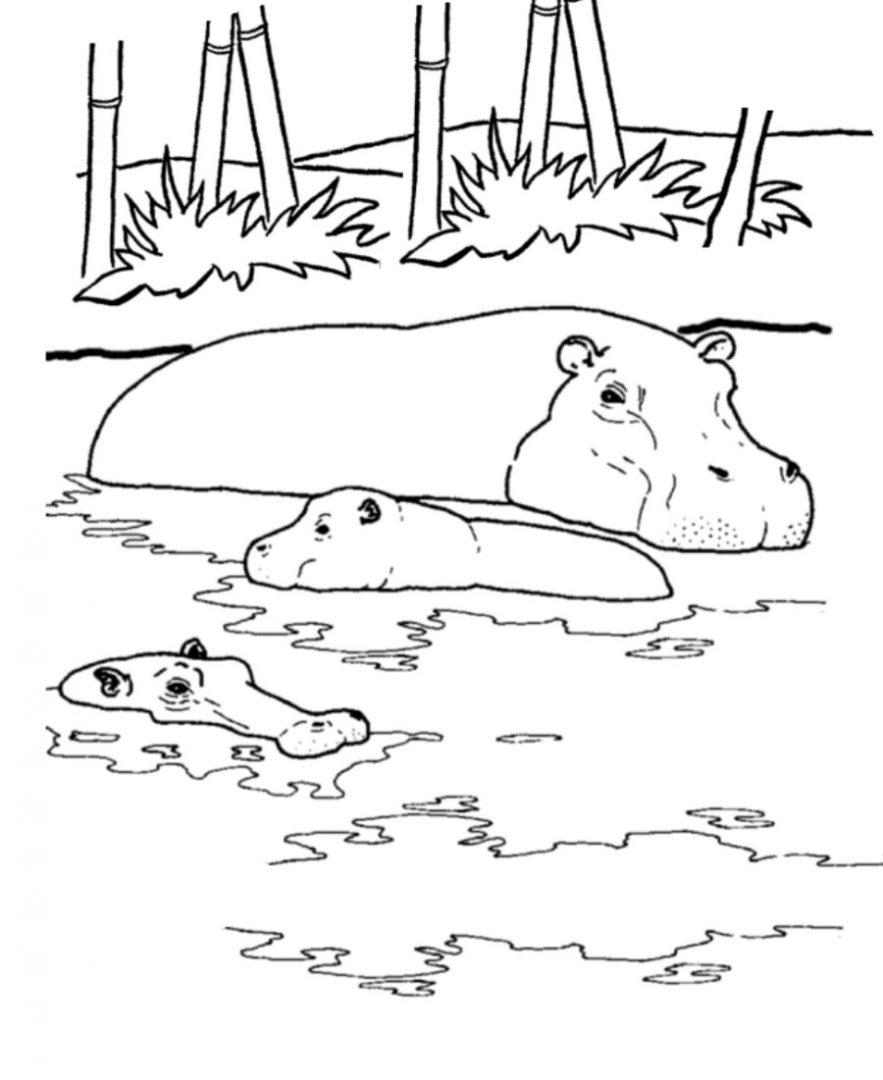 Hipopótamos para colorear :: Imágenes y fotos